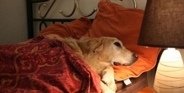 dog friendly hotels