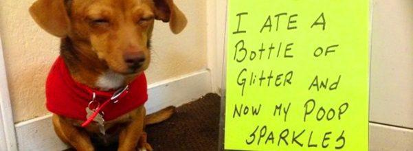 hilarious dog shaming photos