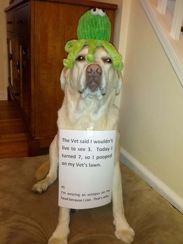 dog shaming photos