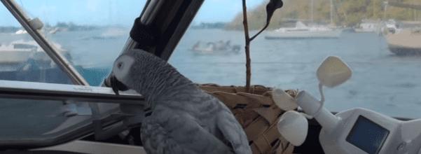 Parrot sailboat