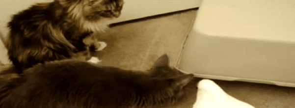 3 pets