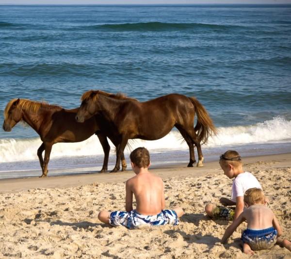 Hearts And Horses Long Island