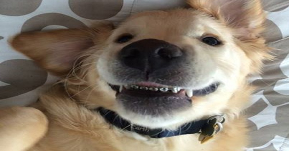 Can a Dog Get Braces? | Canine Braces for Misaligned Teeth