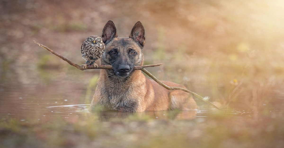A Dog And Owl Became Best Friends And Now They Can't Live
