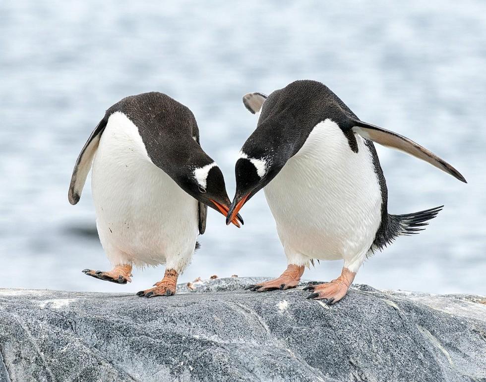 Удачи здоровья, пингвин картинки смешные