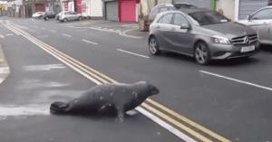 seal crosses road