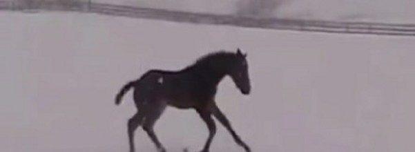 horse snow