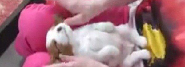 puppy massage