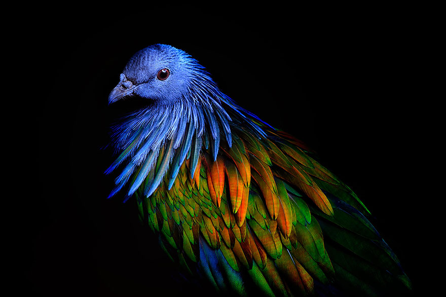 dodo7