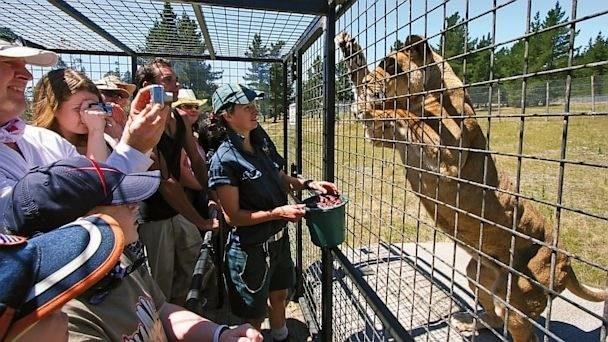 reverse zoo