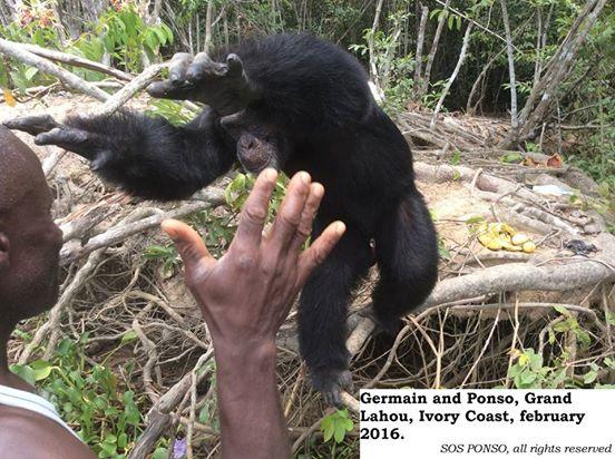 chimp3