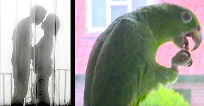 parrot-cheat