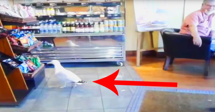 seagull-store