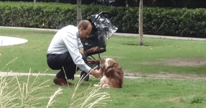 16-year-old dog