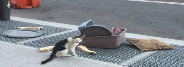 brooklyn cat