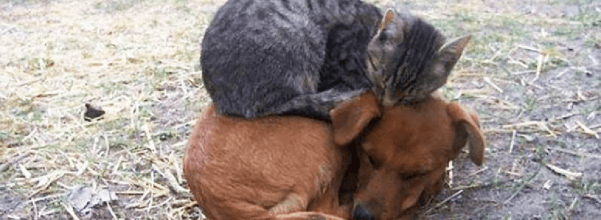 cats napping on dogs