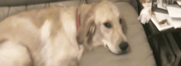 Dog demands seat