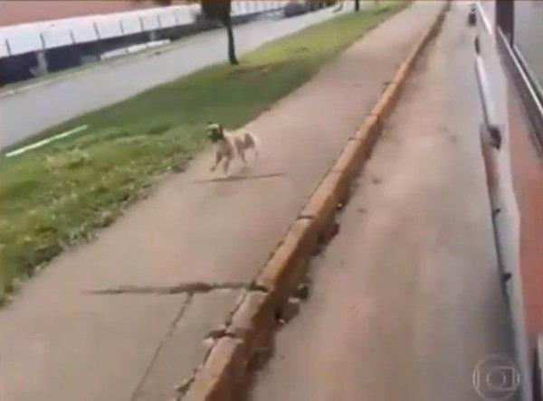 dog chases ambulance