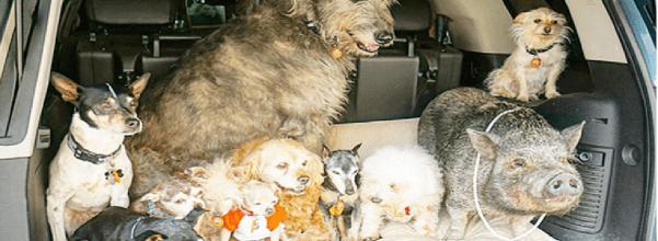 Man adopts elderly dogs