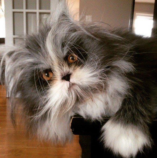 cat werewolf syndrome