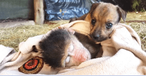 orphaned Monkeys and pups