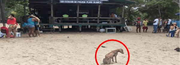 starving dog saved