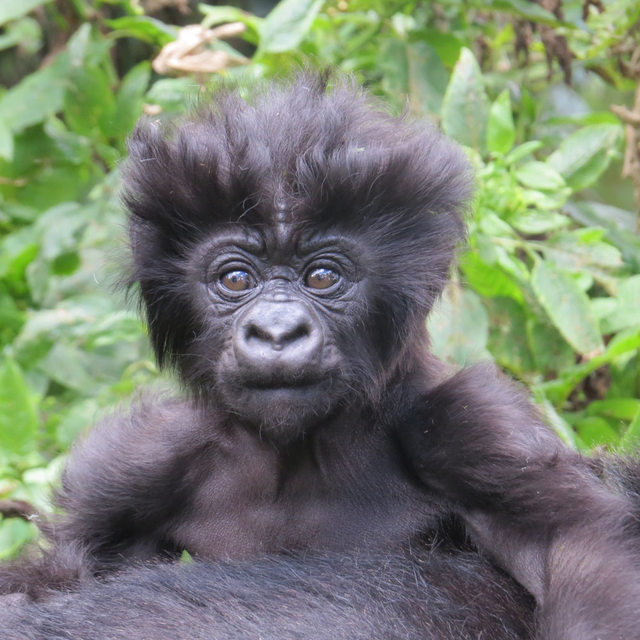 10 Animals With The Most Incredible Hair