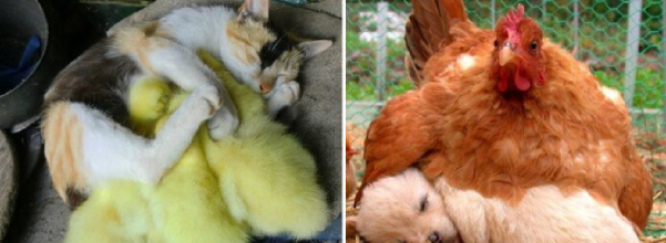 unlikely animals sleeping together
