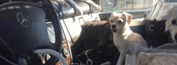 22 dogs lived in car