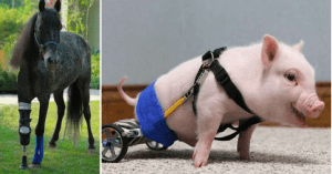 animals with prosthetics