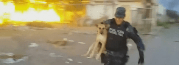 Dog is rescued from a fire
