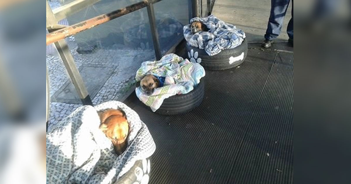 homeless dogs