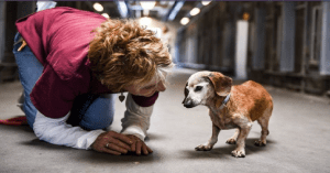 Blind senior dachshund given to shelter