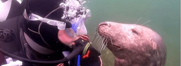 seal makes friends with diver