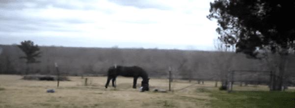 Horse acting strange