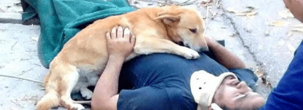 Dog refuses to leave unconscious dad