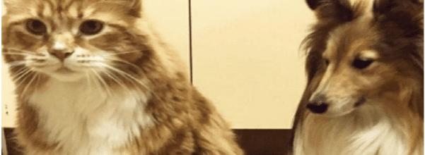 30 lb. cat