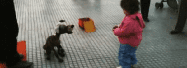 Toddler Mesmerized by dog puppet