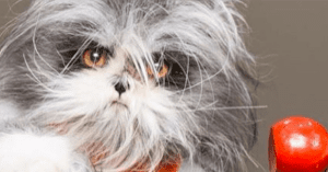 cat with werewolf syndrome