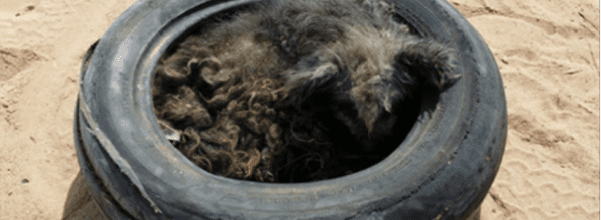 dog rescued from landfill