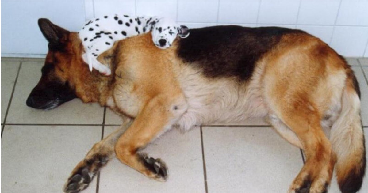 The Position Your Dog Sleeps In Reveals Secrets About Their
