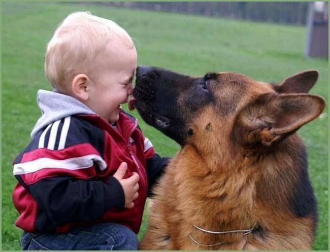 вариант немецкая овчарка и дети его