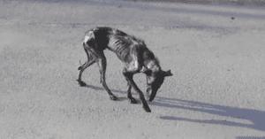 feral dog rescued