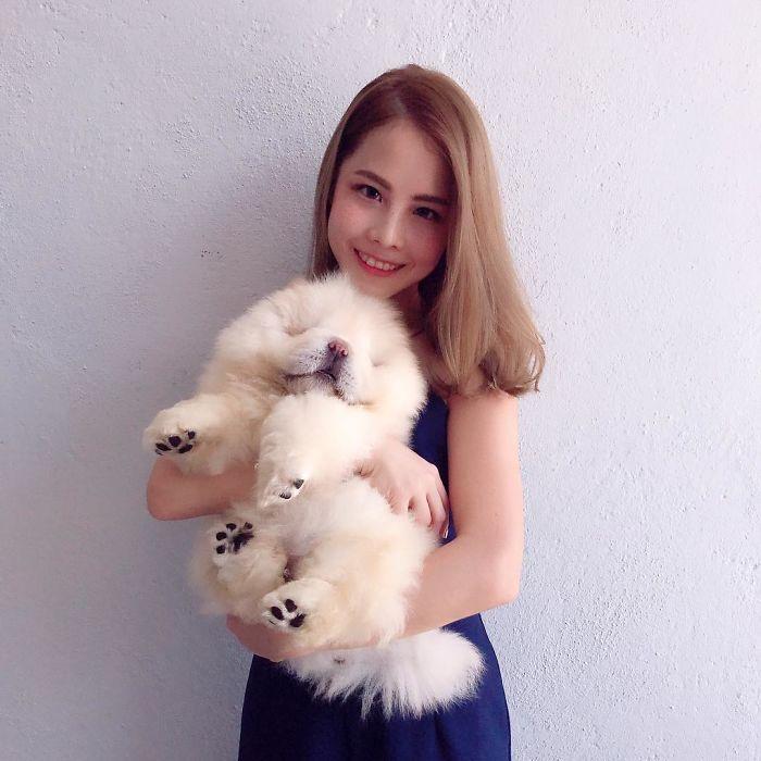 instagram star puppy