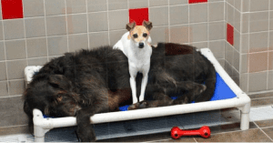 bonded dogs rescued from shelter