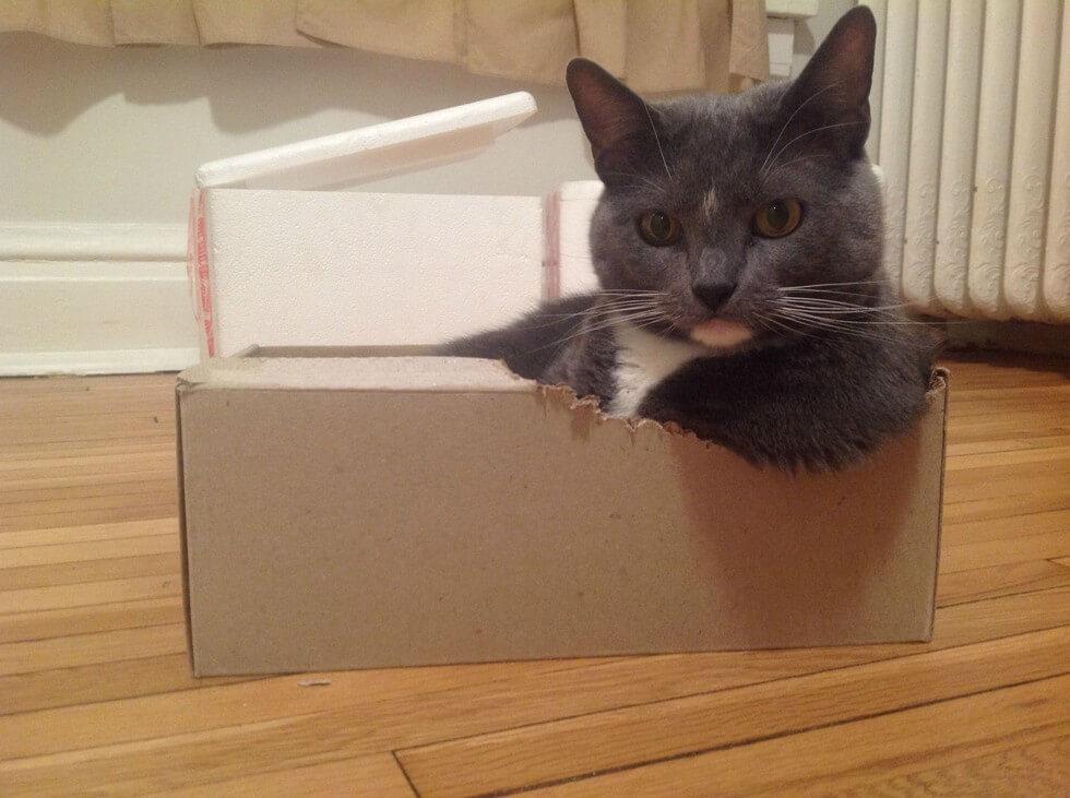 build outdoor wooden cat house