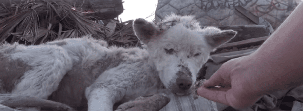 dog rescued from trash pile
