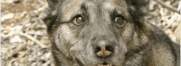 reformed dog hater