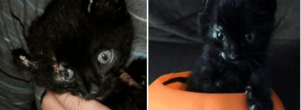 kitten rescued from car fire