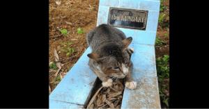 cat sleeps on owner's grave